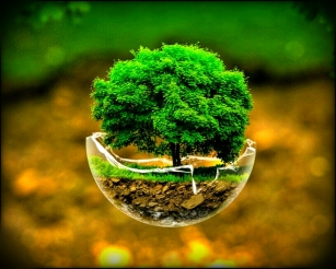wpid-trees_trees_creative_nature_green_1024x76801_20150614144842939.jpg.jpeg
